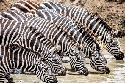 Karibu Serengeti, el libro sobre la fauna africana del fotógrafo Ignacio Itarte