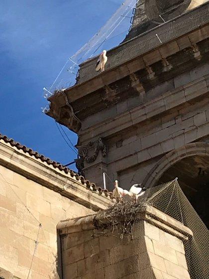 La Generalitat retira cinco nidos de cigüeñas de la Catedral Nova de Lleida