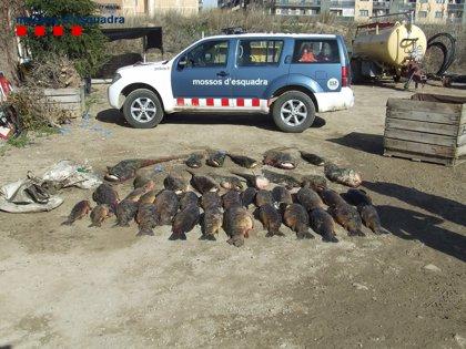 Detienen a dos hombres en Segrià (Lleida) por pescar ilegalmente en la cuenca del río Segre