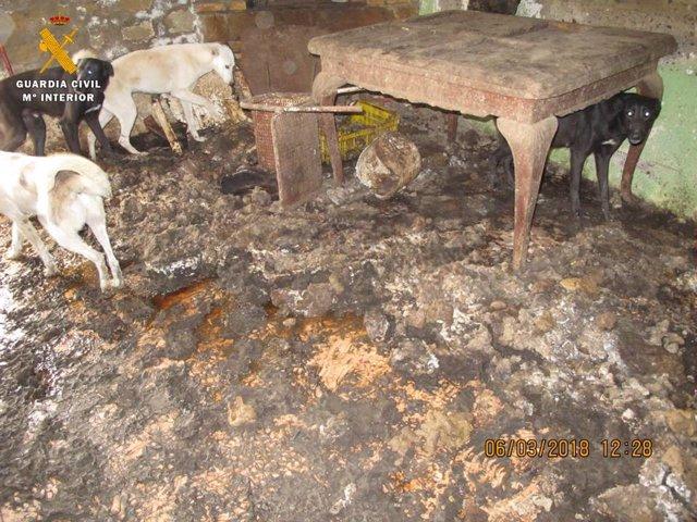 Investigada por tener 21 perros y 8 gatos en malas condiciones sanitarias.