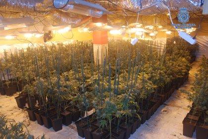 Desmantelado un laboratorio clandestino de cultivo de marihuana en Olías del Rey
