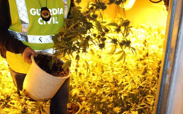 Sucesos.- Desmantelan una plantación de marihuana en Sant Jaume dels Domenys (Tarragona)