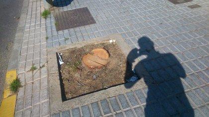 El Defensor del Pueblo Andaluz pregunta por la tala de grevilleas de San Juan (Sevilla)