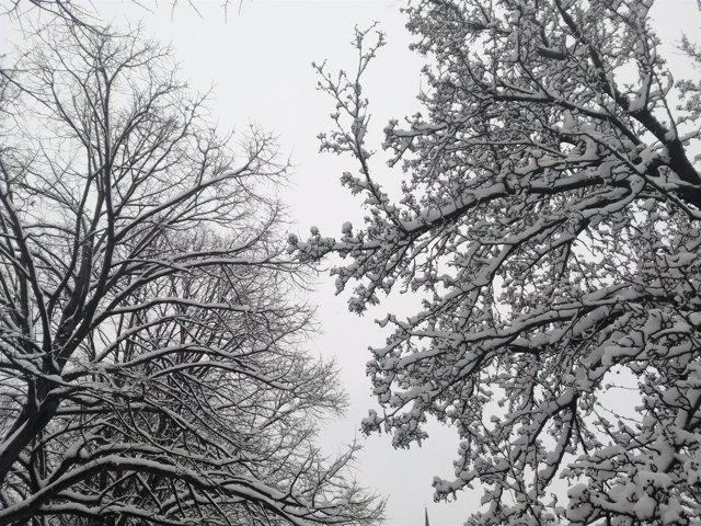 Nieve en Gipuzkoa.
