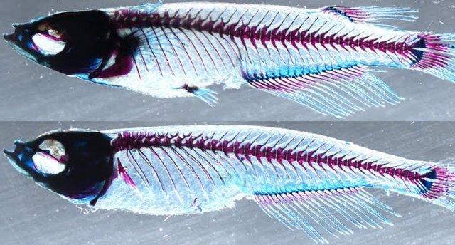 Revelado el origen evolutivo de los miembros de los vertebrados