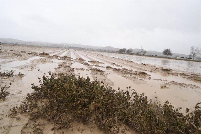 Cultivos granadinos afectados por las lluvias y el temporal