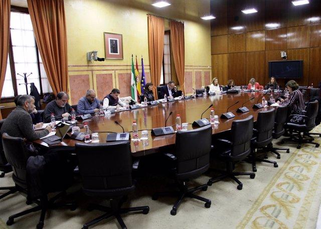 La presidenta del CAA comparence en el Parlamento