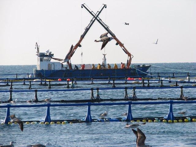 Barco atunero Grupo Balfegó