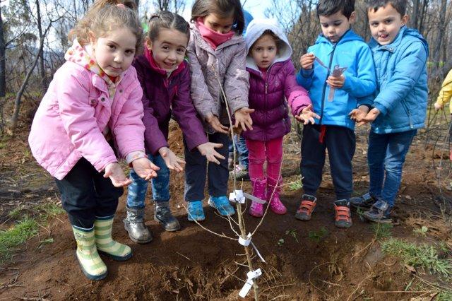 Acción de reforestación de la Fundación Amigos de Galicia en Chan de Vide