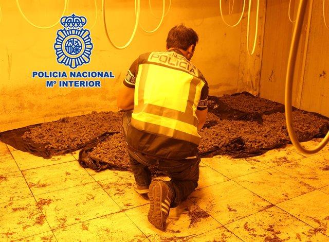"""Nota De Prensa 1: """"Detención De Grupo Organizado Dedicado A La Explotación De Pl"""