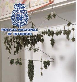 """Policía Nacional Nota De Prensa Y Dos Fotos """"La Policía Nacional Desactiva Un Pu"""