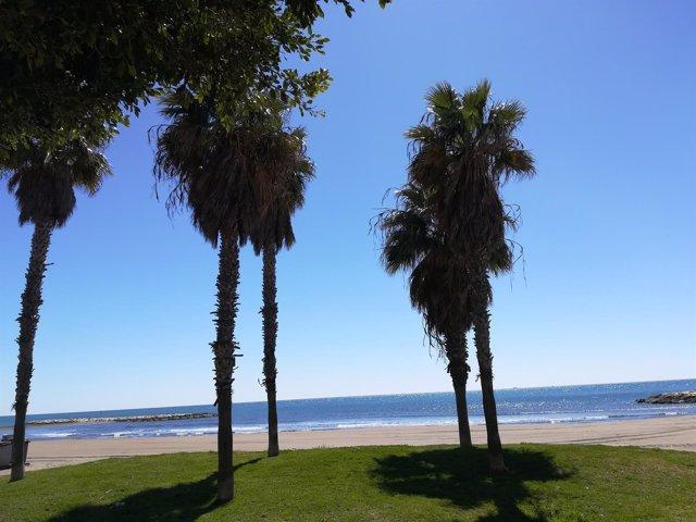 Playa Málaga palmeras