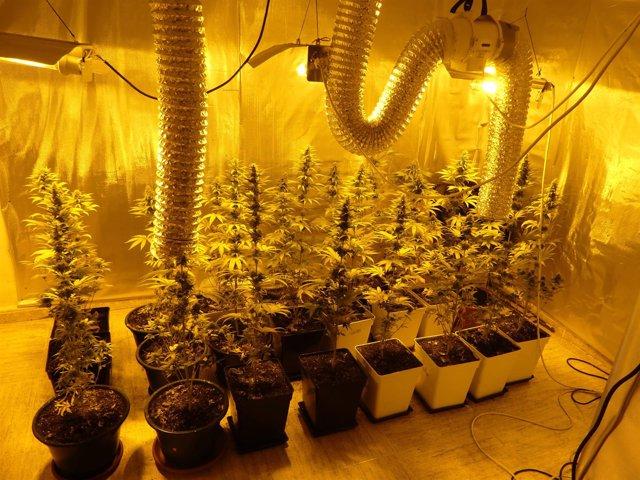 Habitación de la vivienda con la plantación de marihuana 22-3-2018