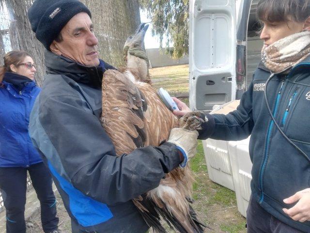 Traslado de los buitres del Centro de Fauna de Valcallent