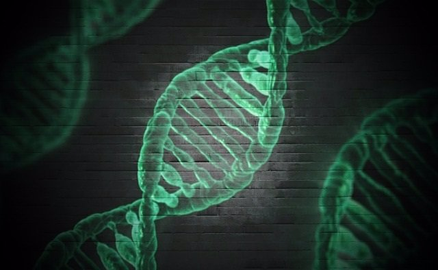 Adn, genes, genética