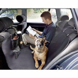 Perro viajando en coche con su dueño