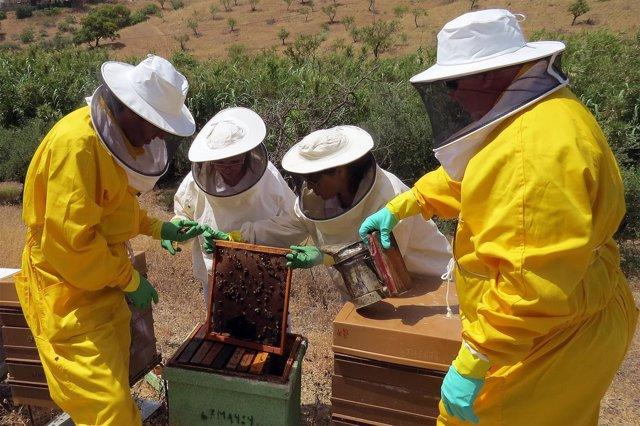 Abejas panel investigadores UMA miel y propolis contra el cáncer de colon