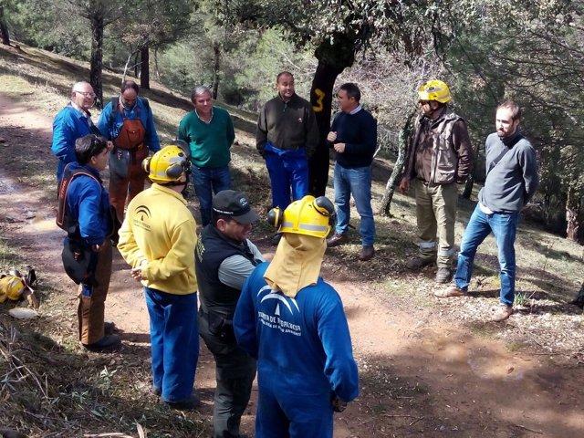 Operativos del Infoca realizan trabajos de prevención de incendios en Jaén