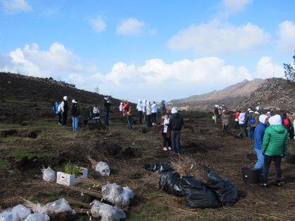 'Unha nova árbore' de Abanca planta mil ejemplares autóctonos en Santiago y Chandebrito
