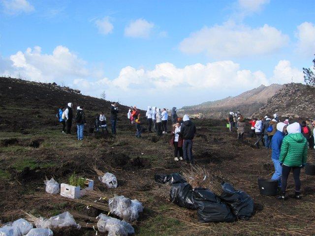 Abanca promueve acciones de reforestación en Chandebrito