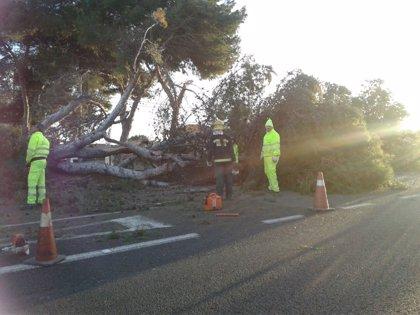 El 112 registra medio centenar de incidencias por el fuerte viento en la provincia de Málaga