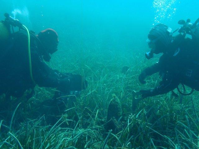 Rescatan las nacras del Mediterráneo, en peligro crítico de extinción