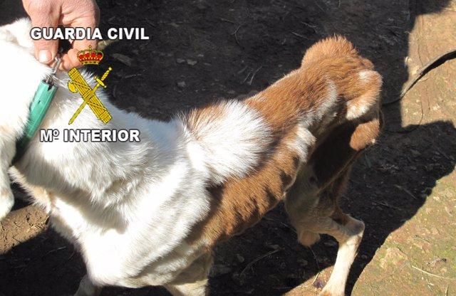 Uno de los perros que tenía el investigado por presunto maltrato animal.
