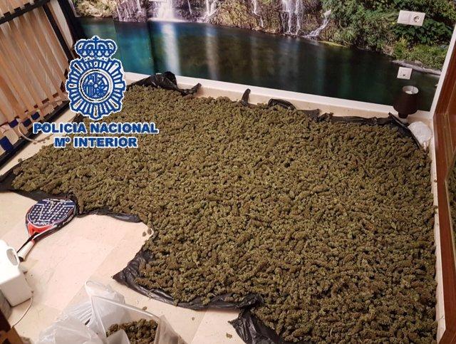 Desarticulada una red de tráfico de marihuana y hachís
