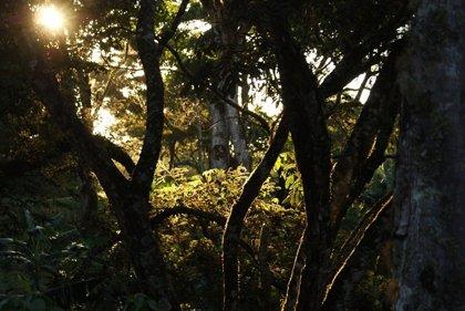 Un vertido en un río de Colombia alcanza los 500 barriles de crudo