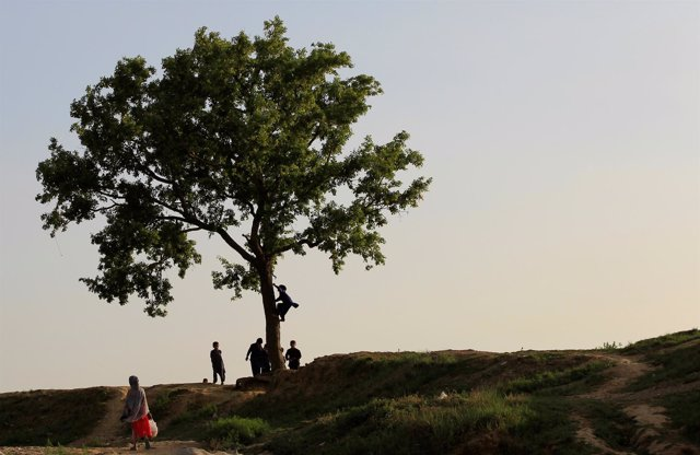 Children play around a tree in Islamabad, Pakistan June 29, 2017. REUTERS/Caren