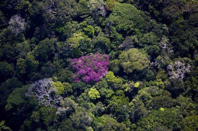 La Amazonía alberga 60.000 especies de plantas.
