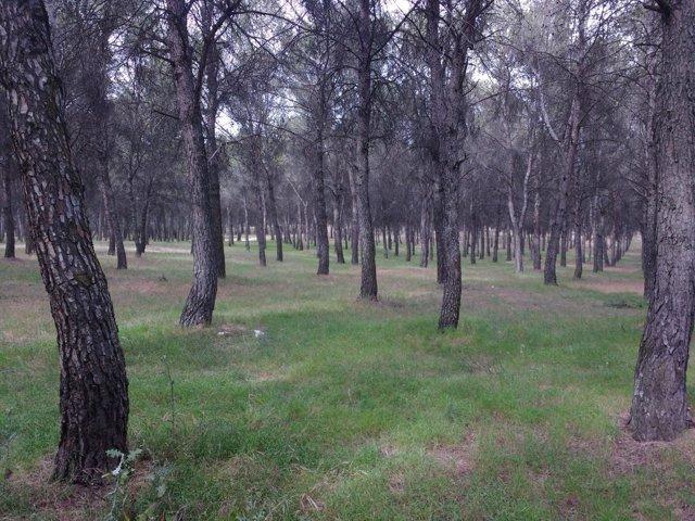 Iamgen de los árboles