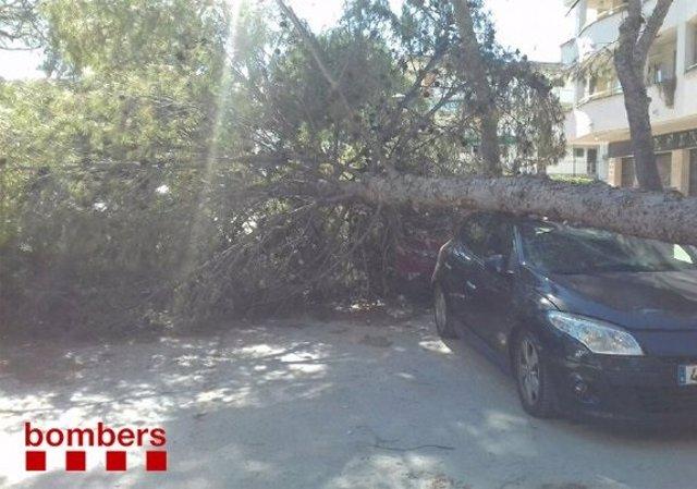 Retirada de un árbol caído sobre un coche aparcado en Salou (Tarragona)