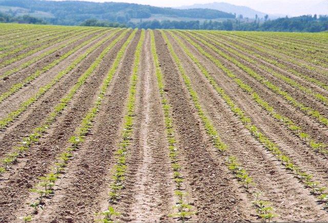 Campo arado