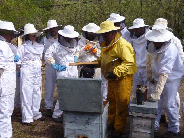Formación de apicultura