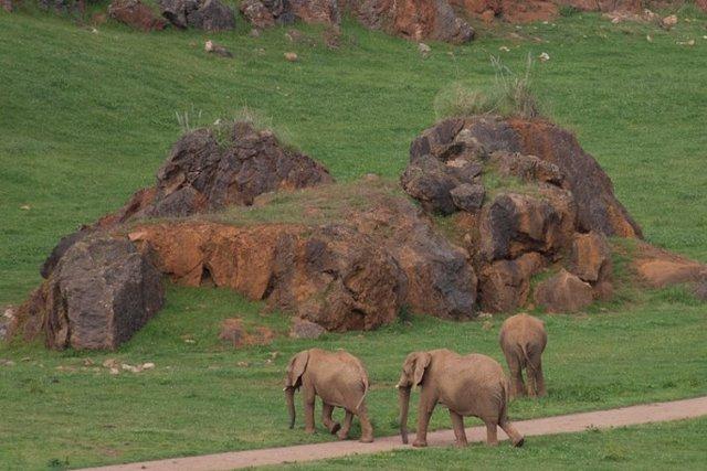 Elefantes en Cabárceno