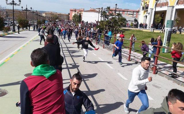 Celebración del toro embolao en Los Barrios (Cádiz)