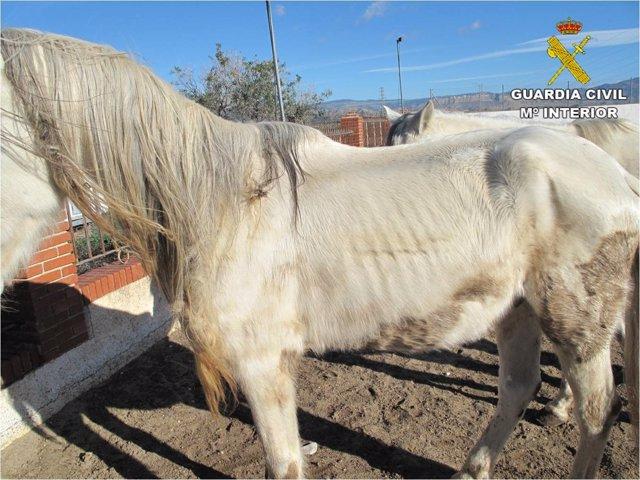 Uno de los caballos analizados
