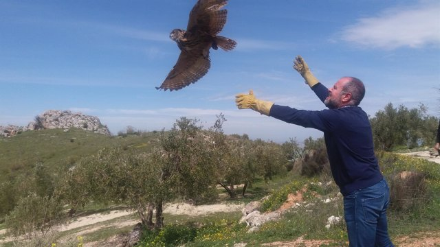 Algar libera una de las aves en Luque