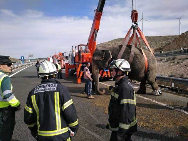 Elefante accidentado