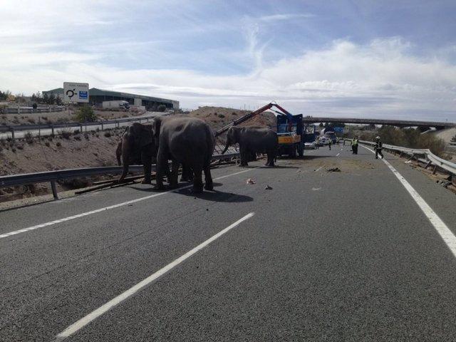 Accidente de un camión que transportaba elefantes en Albacete