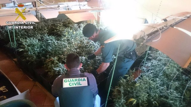 Dos agentes en la incautación de la droga en Pedreguer