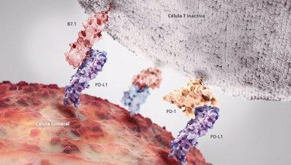 Primera inmunoterapia en España para tratar tumores de pulmón y vejiga
