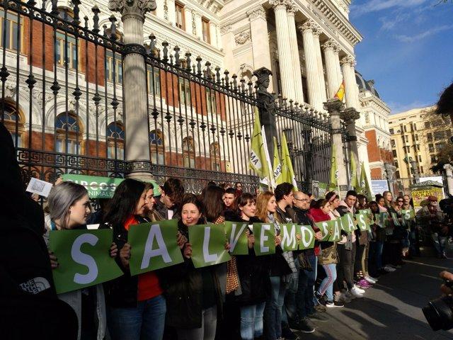 Concentración de PACMA frente al Ministerio de Medio Ambiente contra el circo