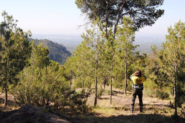 La Diputació Consolida El Modelo De Trabajo De Sus Brigadas Forestales En Base A