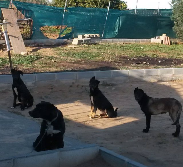 Localizan a varios perros peligrosos en Bollullos Par del Condado (Huelva)