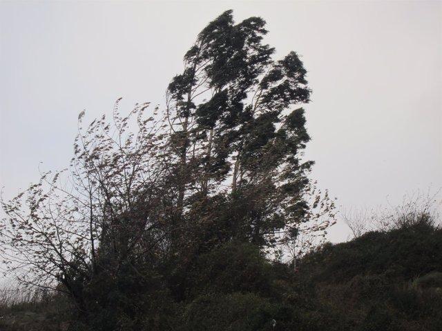 Imagen de Archivo. Racha de viento