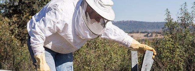 Un apicultor en una colmena