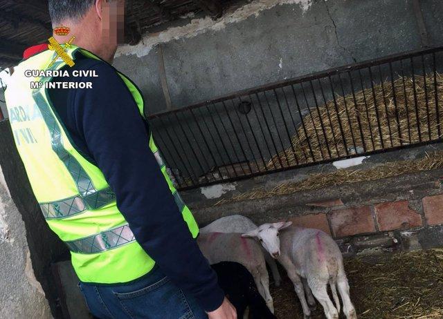 Un agente de la Guardia Civil posa en una granja durante la operación