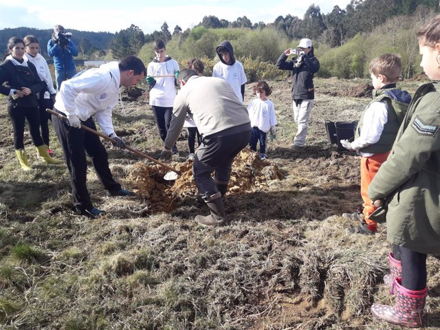 Plantación de árboles en Miño